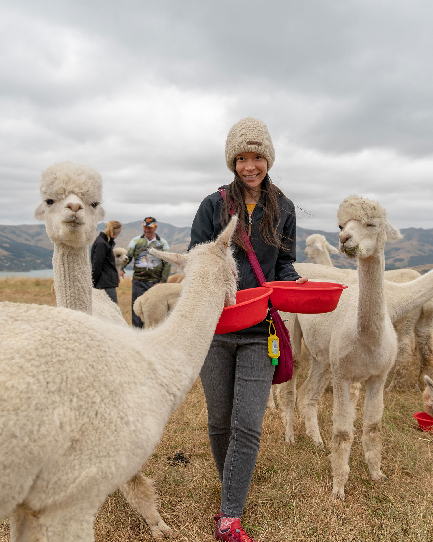 Thaneeya McArdle feeding alpacas at Shamarra Alpaca Farm in Akaroa, New Zealand