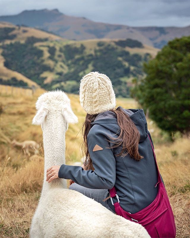 The best way to spend an afternoon: chillin' in a field, gazing at the gently rolling hills with a new alpaca friend! 💕⁣ ⠀ ⠀