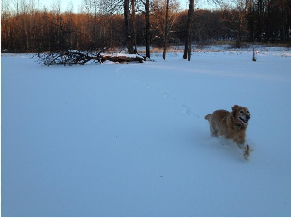 Happy dog, Jackson 2010