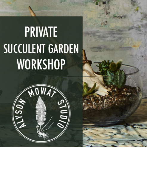 Copy of Copy of Private Succulent Garden Workshop
