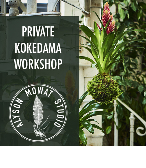 Copy of Copy of Private Kokedama Class