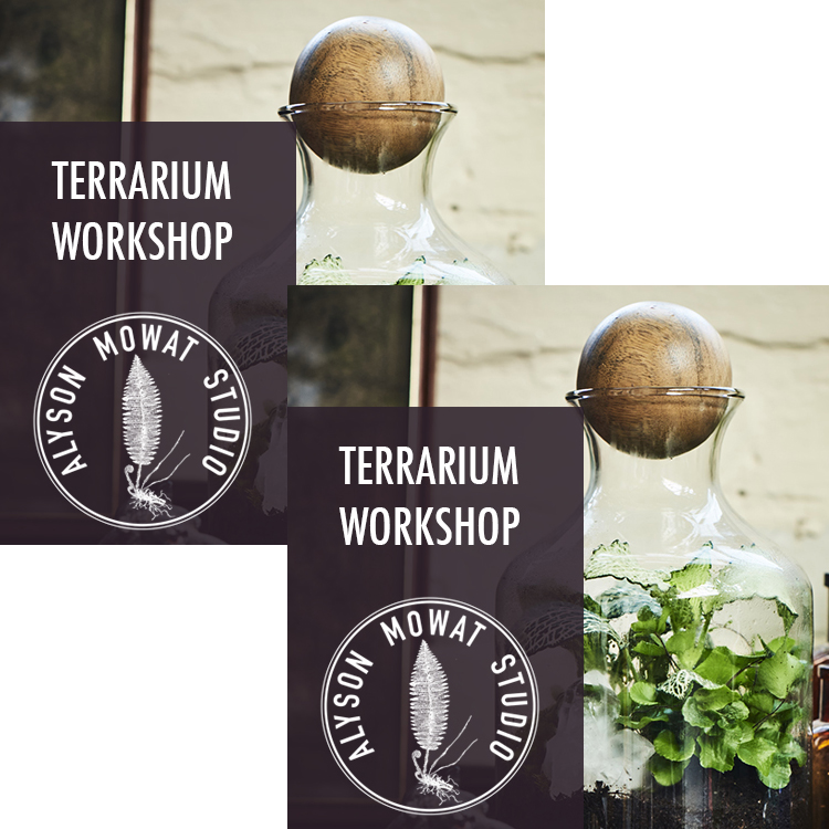 Two for Group Terrarium Workshop