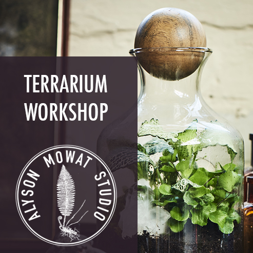 One for Group Terrarium Workshop