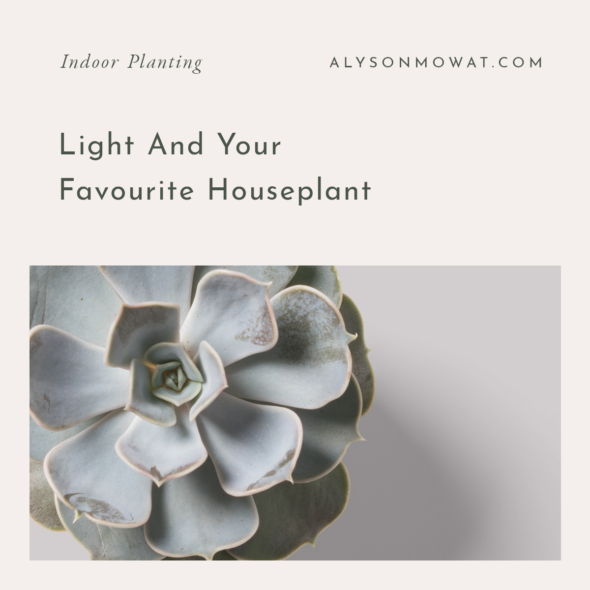 Light and your favourite houseplant