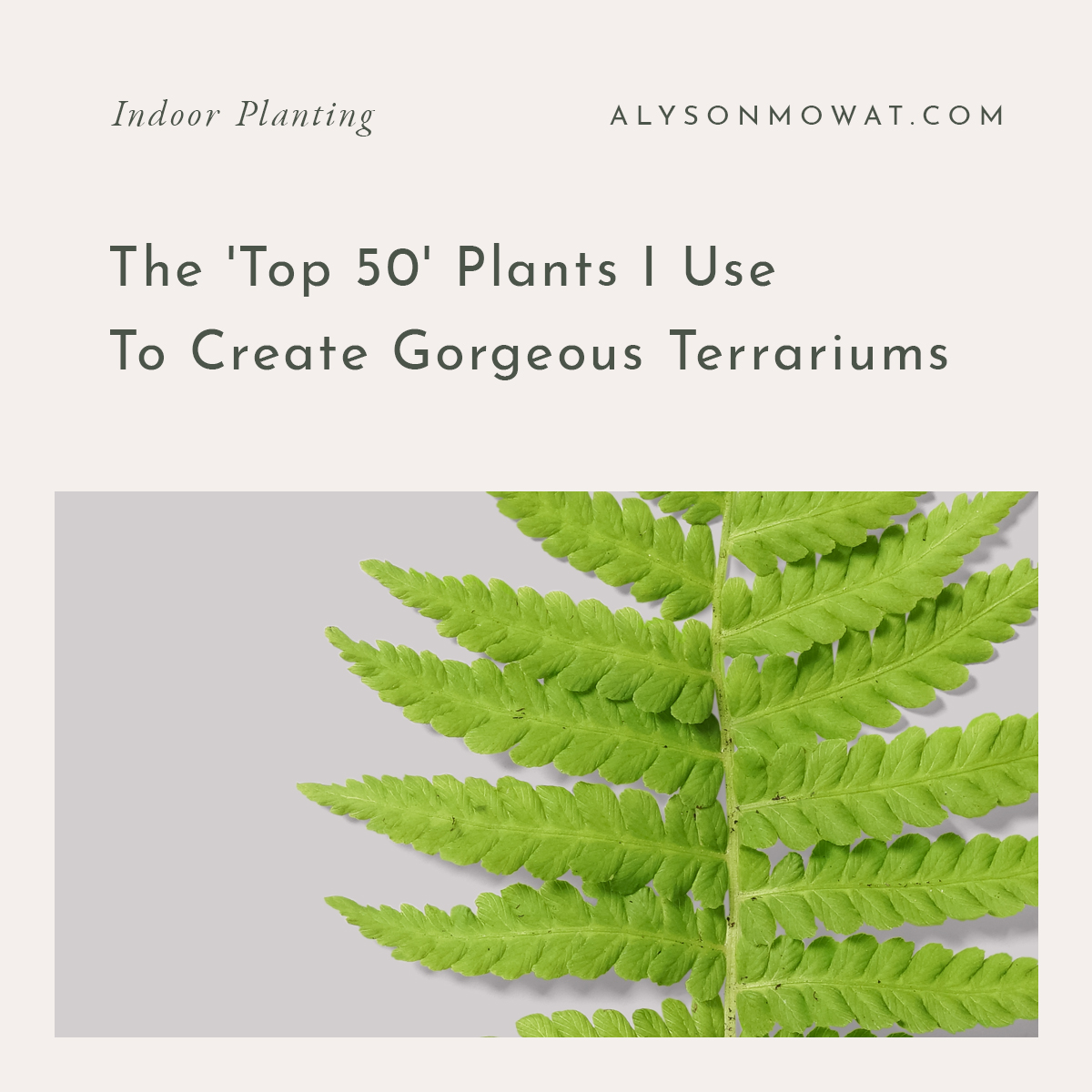 The 'Top 50' Plants I Use To Create Gorgeous Terrariums