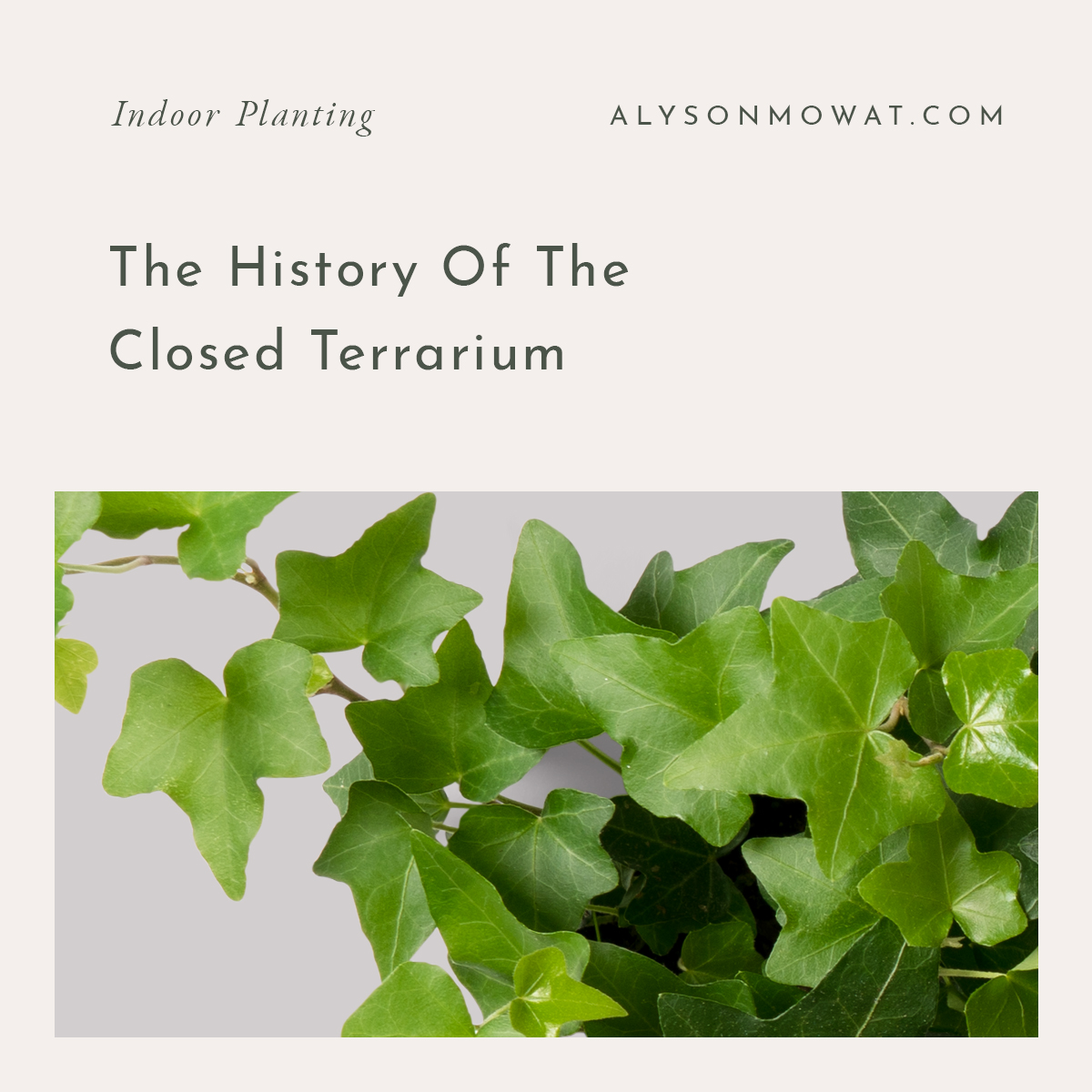 The History of the closed Terrarium