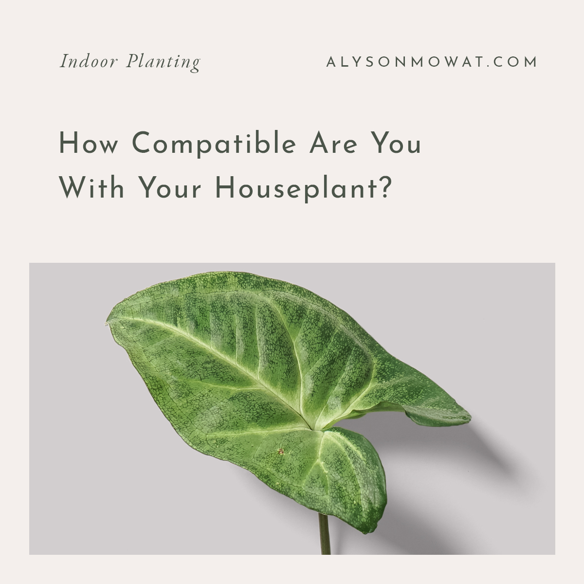 How-Compatible-Are-You-With-Your-Houseplant-.jpg