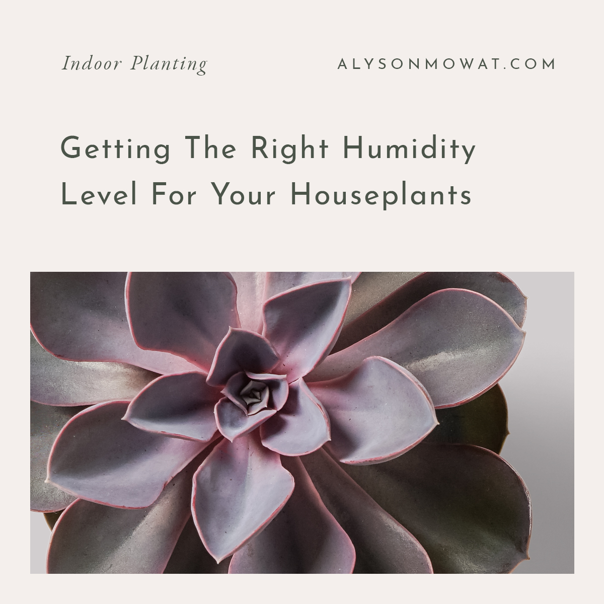 Getting The Right Humidity Level for Your Houseplants