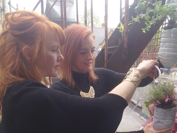 Planting a bottle tower garden on my balcony at my studio