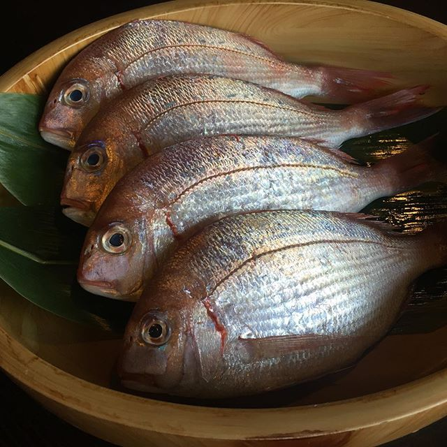 Baby Sea Bream (Kasugo Dai) from Japan #japanesefish #umisushiroseville #kasugodai #nofilter