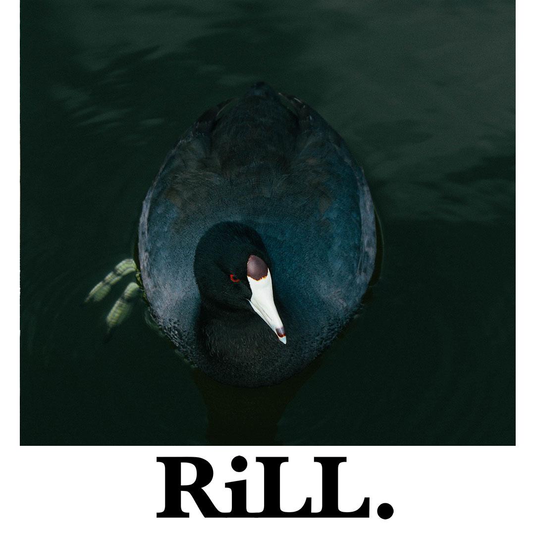 RiLL LAYOUT 7.jpg
