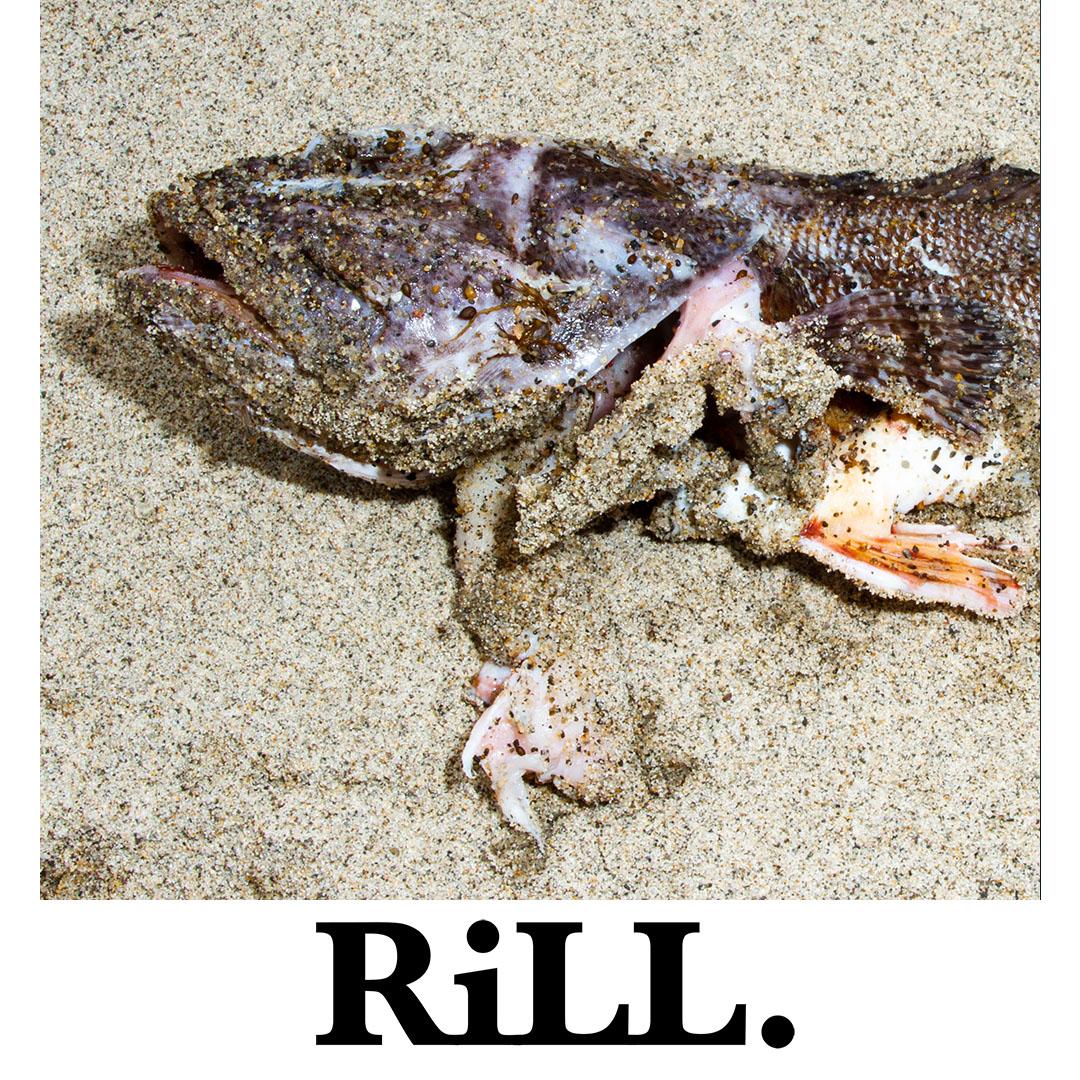 RiLL LAYOUT 9.jpg