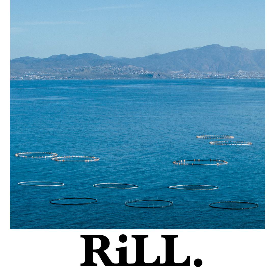 RiLL LAYOUT 18.jpg
