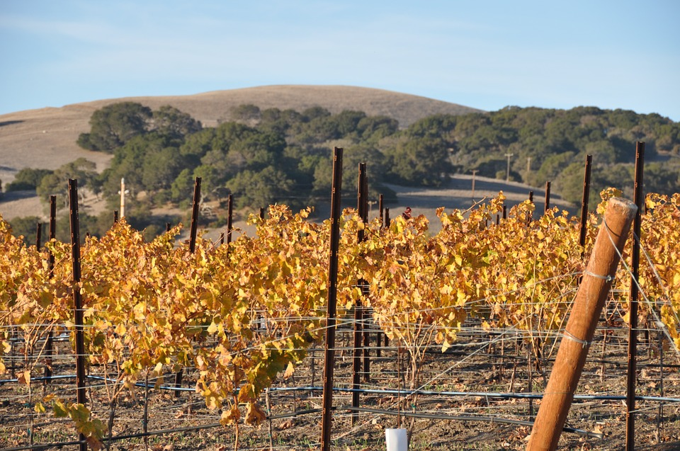 four_ways_to_do_sonoma_valley_wine_tours.png