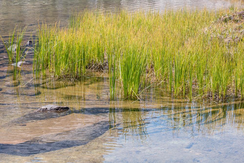 Elizabeth-Lake-Grasses-#2_DSC8044-HDR-8043-8047.jpg