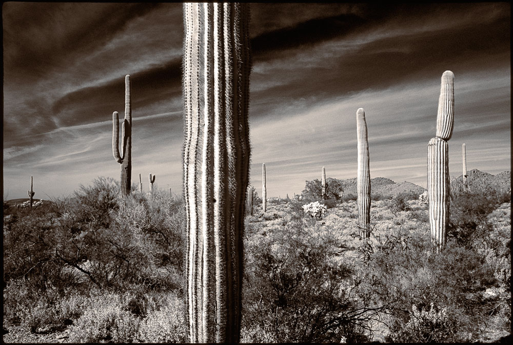 350-01413-10-Cactus-Group-1-2015-Edit.jpg