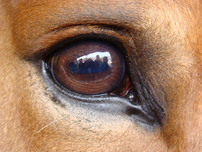 6 - horse eye.jpg