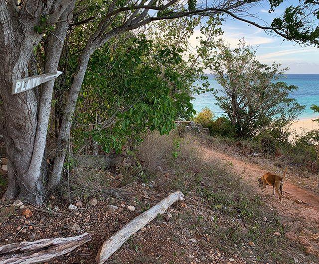Follow the dog, to the beach we go! #playa#guardalavaca#holguin#beach#dog#sunset#cubatravel