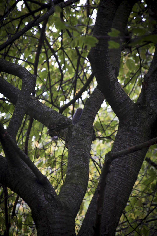 iain rachel military squirrel.jpg