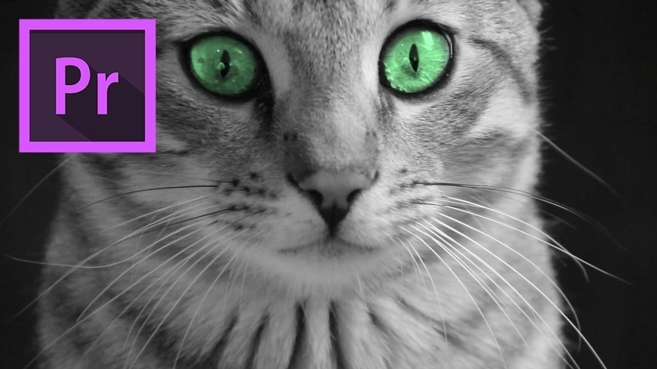 cateyes-orange83-premiere-pro-tutorials.jpg