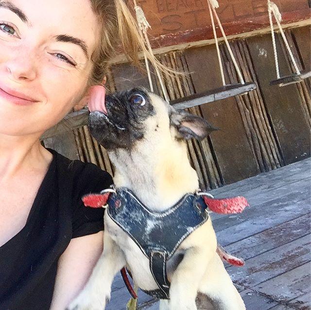 #dogsofholbox Op het prachtige Mexicaanse Holbox wonen haast evenveel hondjes als mensen. Vrijwel allemaal mét halsband en woonadres. Dat komt vooral door het vlijtige werk van de dierenartsen en vrijwilligers bij @refugio_animal_holbox, die alle zwervende exemplaren van de straat plukken, waar nodig verzorgen om ze daarna alsnog van huis te voorzien. Ze zijn blij als je zo nu en dan een hondje voor ze uitlaat (de hondjes maken daarbij reclame voor zichzelf door de hondenriemen waarop groot 'ADOPT ME' staat). Blijer zullen ze misschien nog wel zijn met een financiële bijdrage - hondenvoer en medicijnen zijn niet gratis. Kan via Paypal: moremontesb@gmail.com
