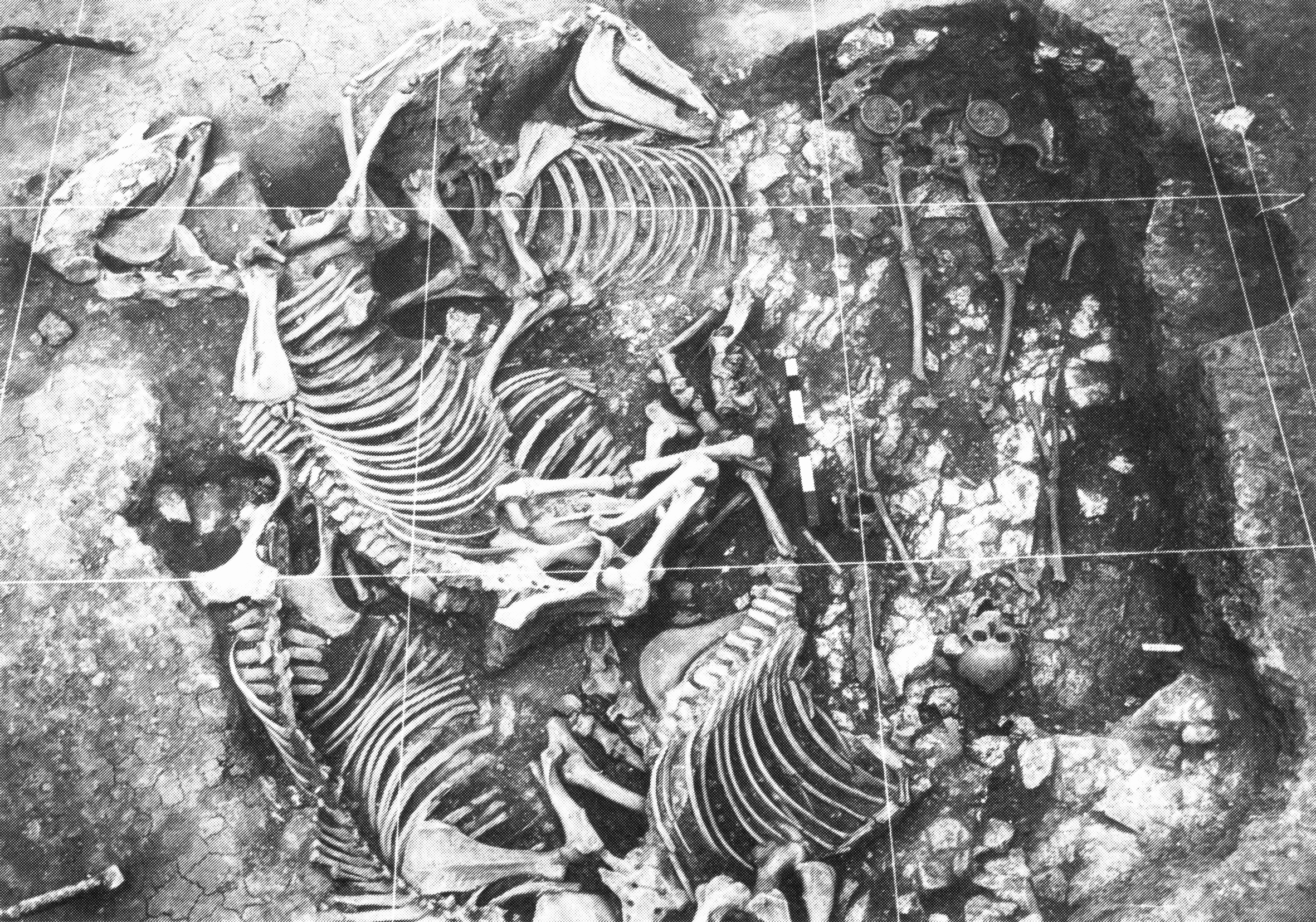 Abb. nach M.-J. Ghenne-Dubois, Les sépultures de chevaux. In: R. Brulet (Hrsg.), Les fouilles du quartier Saint-Brice à Tournai. L´environnement funéraire de la sépulture de Childéric 2. Collect. Arch. Joseph Mertens 7 (Louvain-La-Neuve 1991) 22-34.