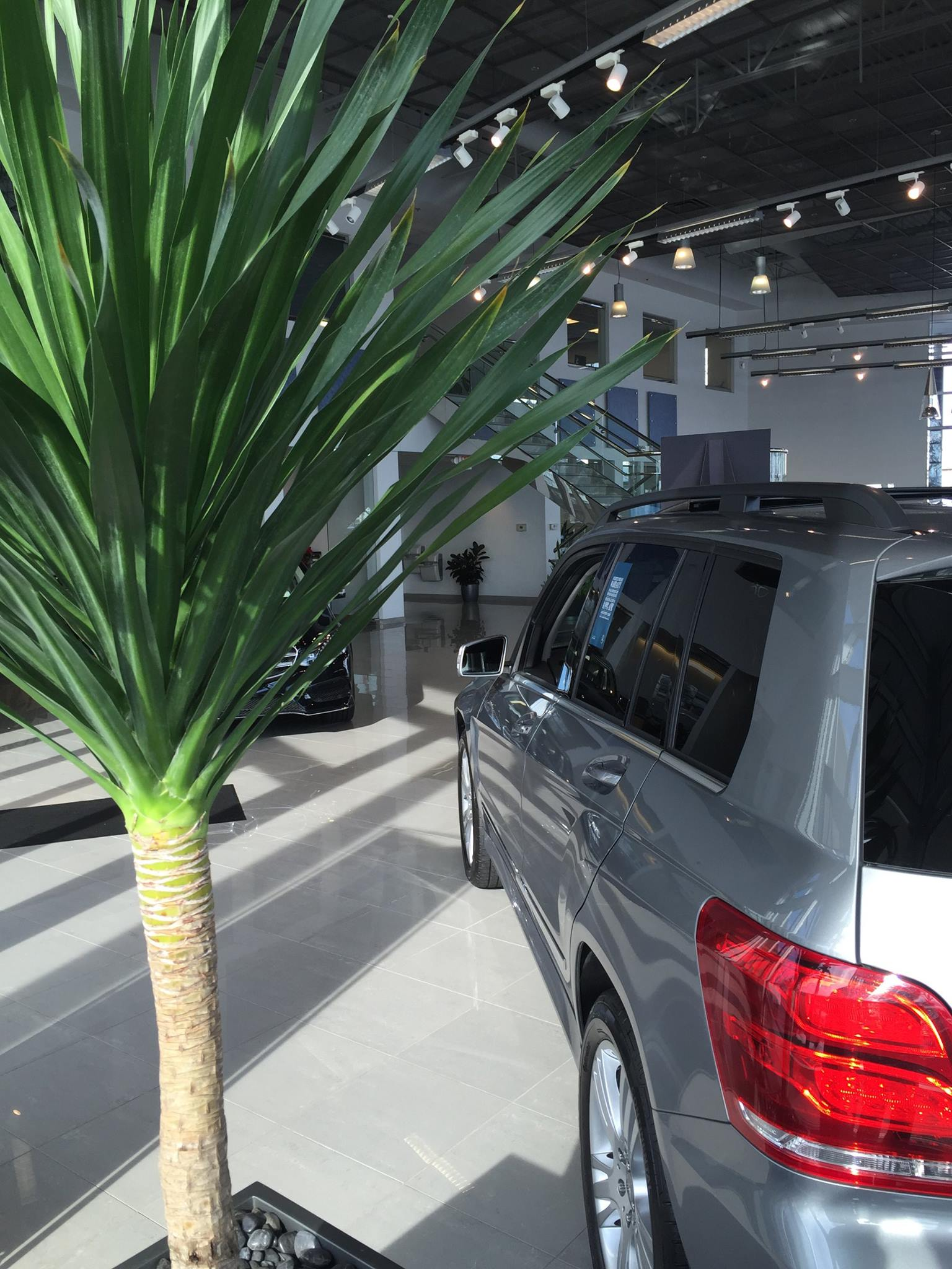 Indoor Plant Rentals