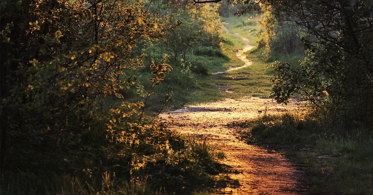 13807-path-through-forest-walk-background-social.1200w.tn.png.jpeg