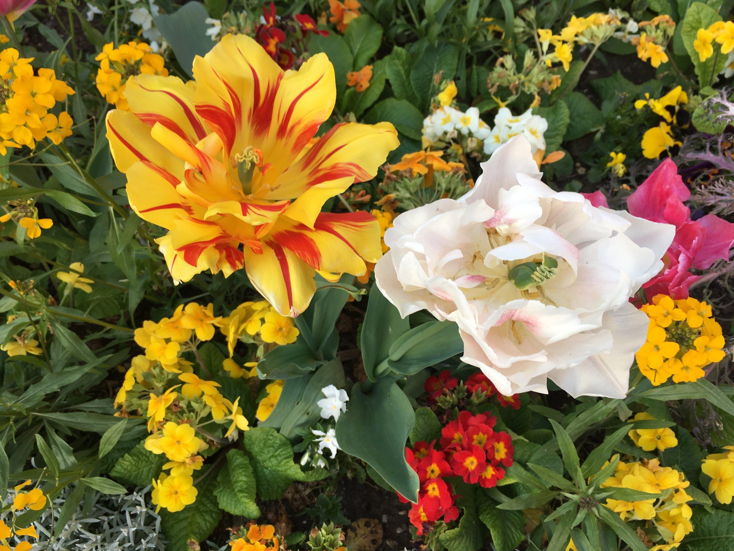 flowers-mortality-paris