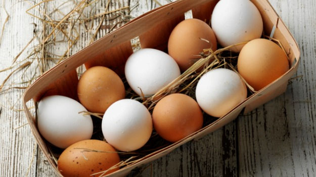 fresh farm eggs superior in nutrition