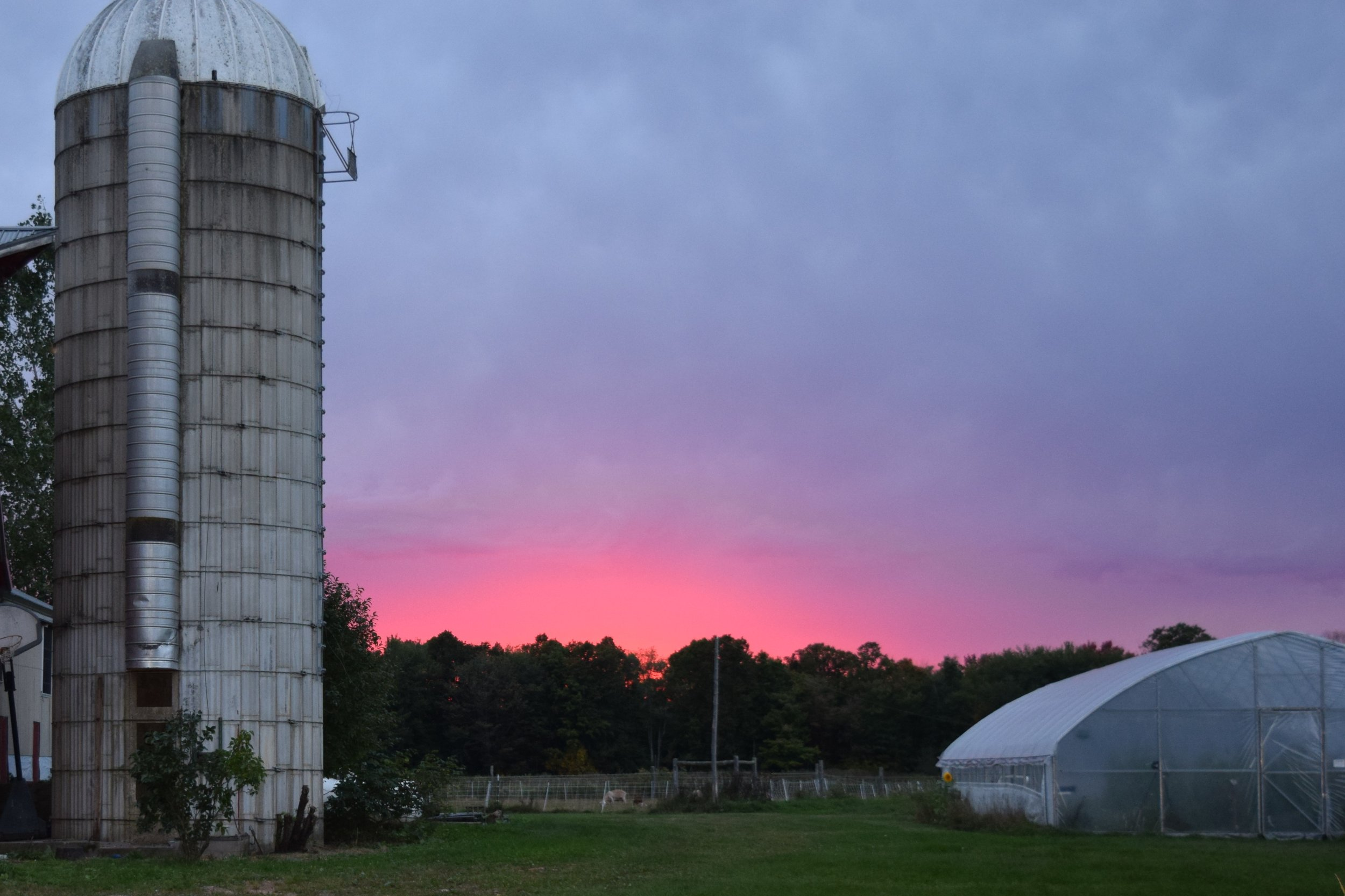 Sunset and hoophouse.JPG