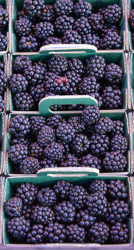 Sullivan-Owen-Rungis-Market-Berries
