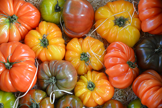 Sullivan-Owen-Rungis-Market-Heirloom-Tomato