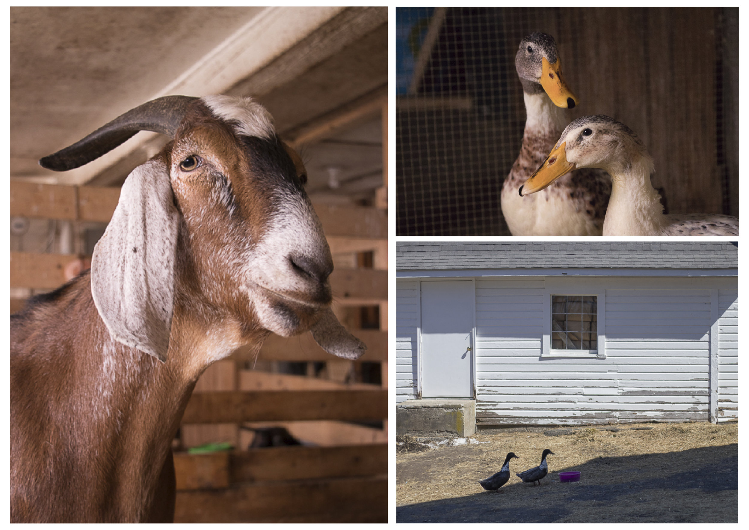 Maple Farm Sanctuary