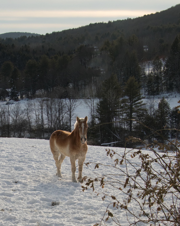 horse_at_farm.jpg