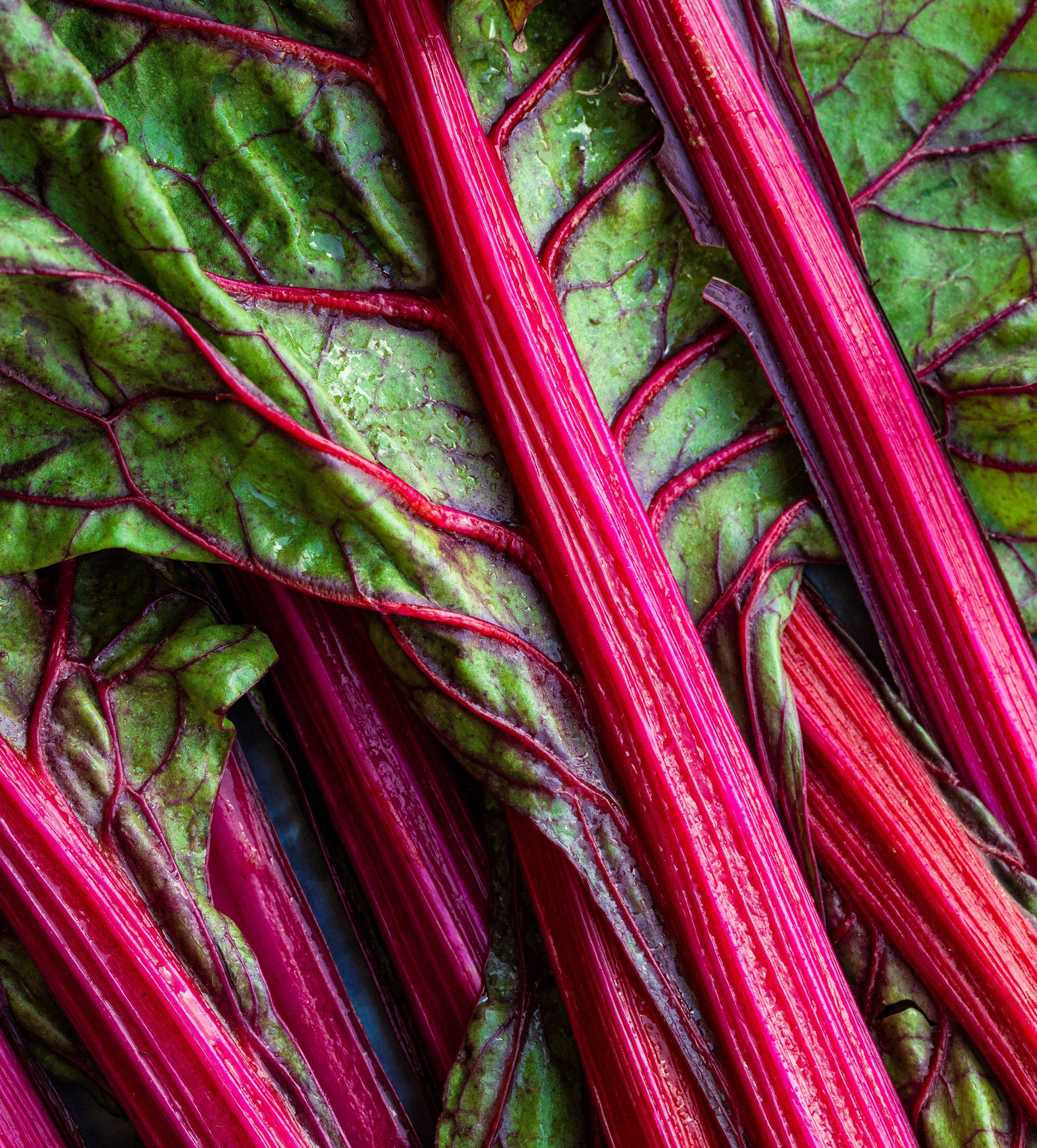 Rainbow chard  (red, yellow, swiss)