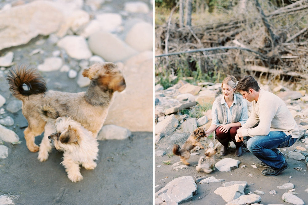 Calgary Wedding Photographers   Bragg Creek Anniversary Photos   Puppy   Photosession with dogs