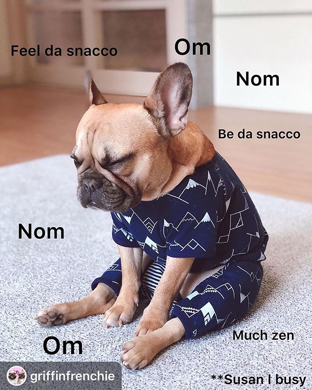 ** me every morning; Susan I busy. Ahhhhhhh @griffinfrenchie never stop never stopping 🐶🧘‍♀️