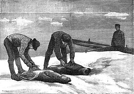 Seal skinning in the 1880s Courtesy photo