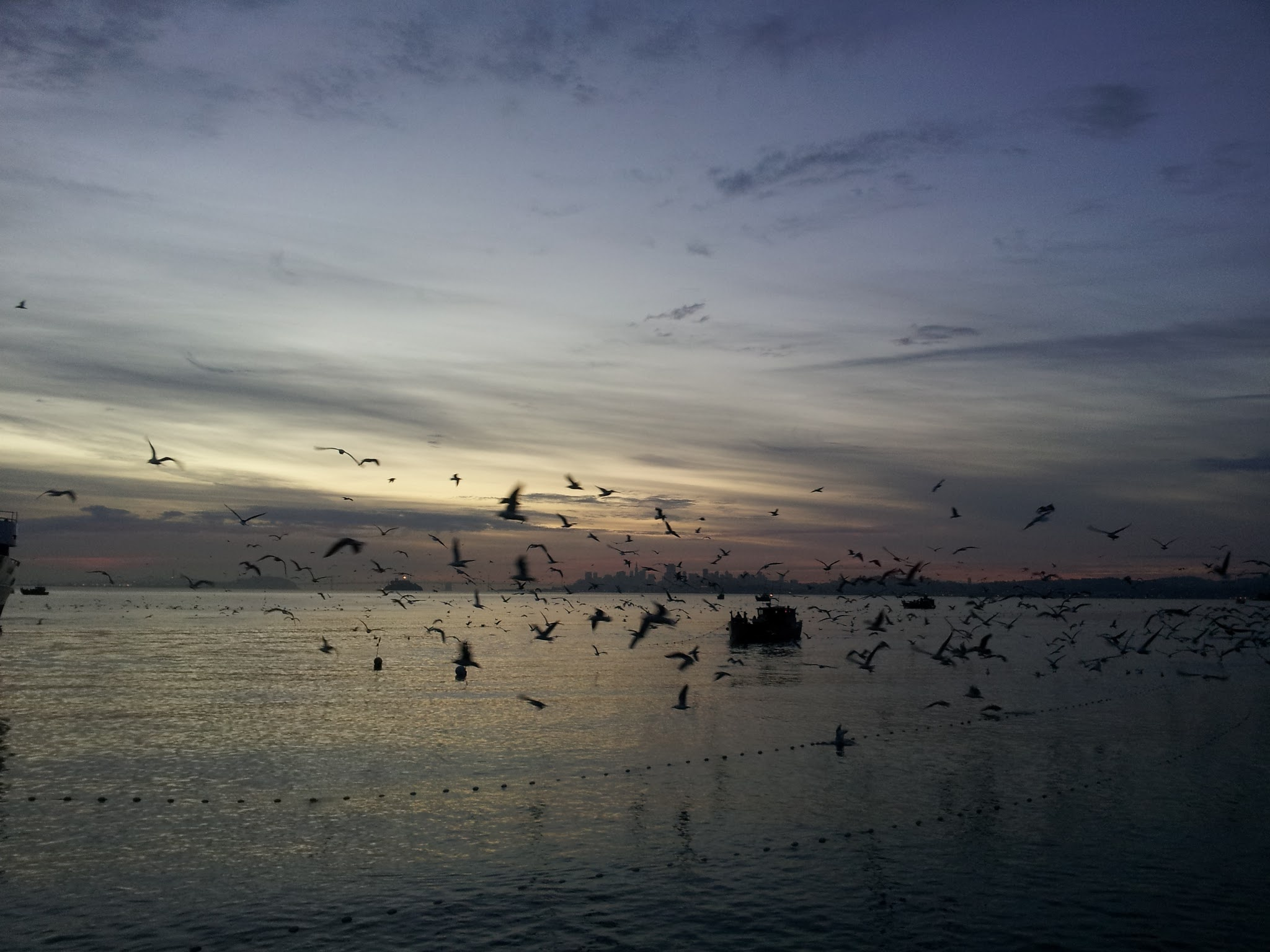 Birds swarm around a herring trawler off Sausalito.  Photo by Nora Sawyer