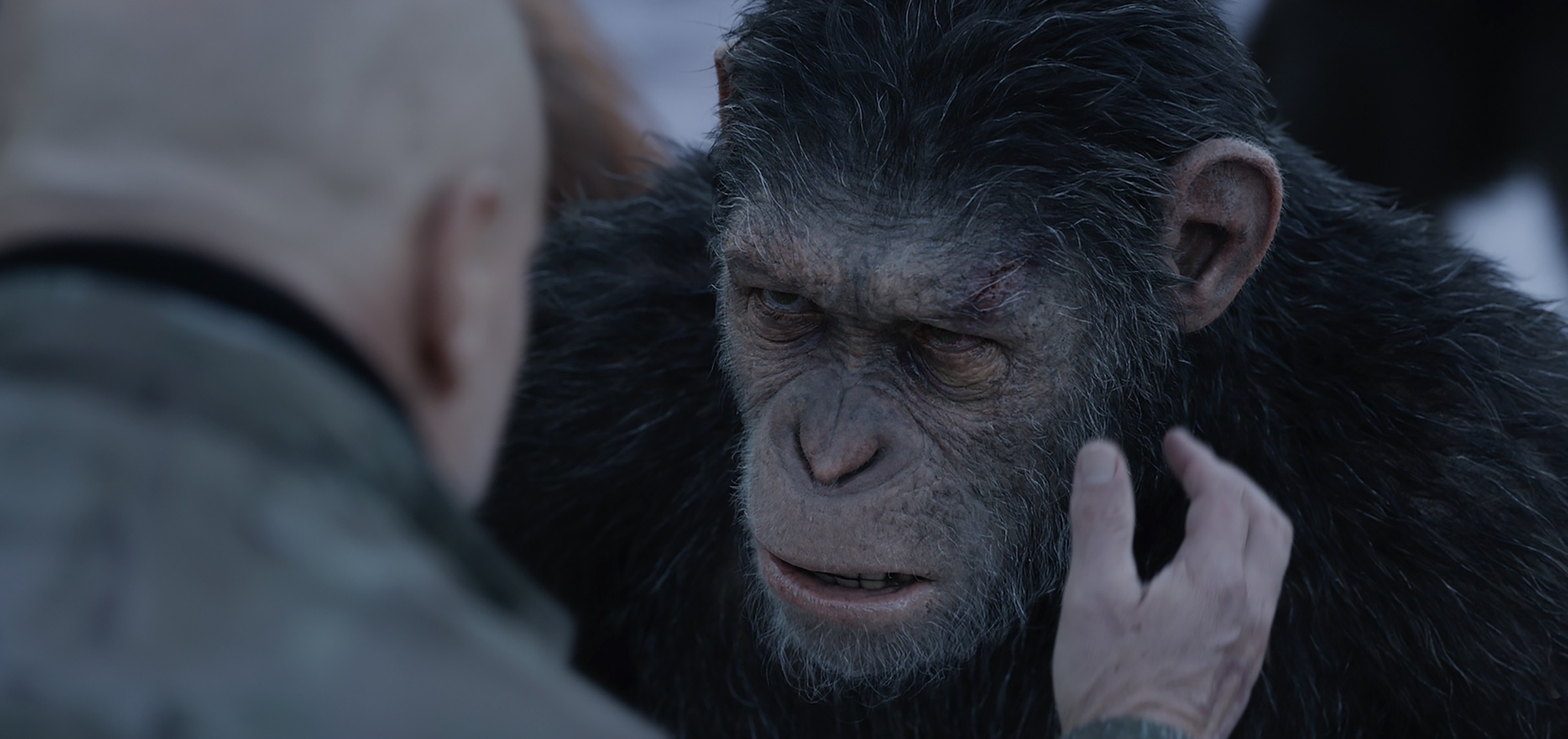 Cesar - War for the Planet of the Apes.jpg
