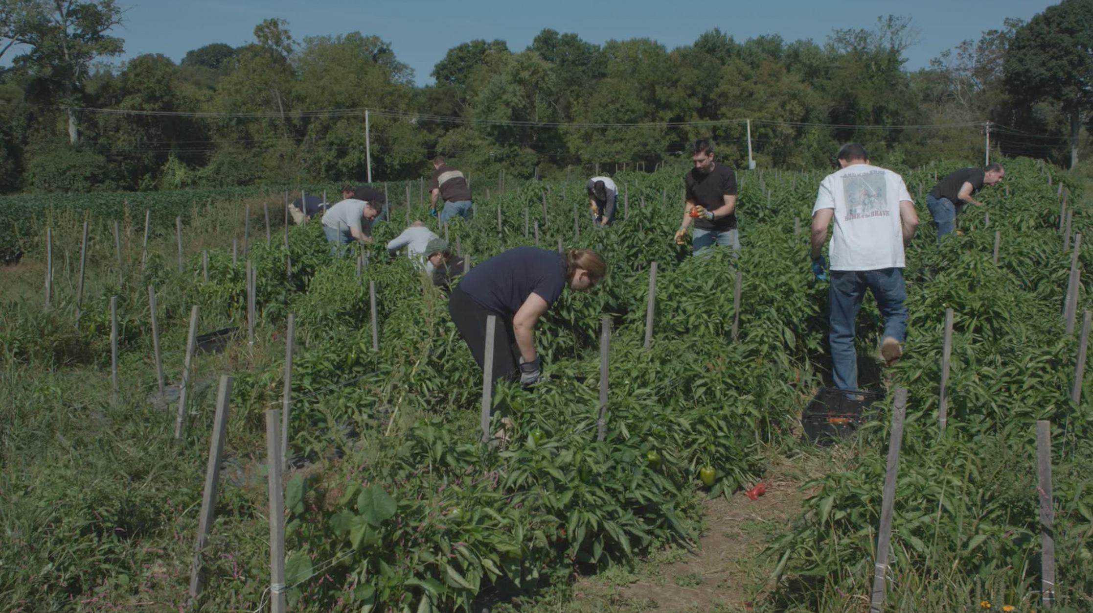 Petes Produce farm