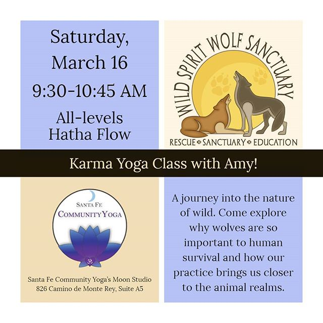 Our next donation-based karma class will benefit the Wild Spirit Wolf Sanctuary! Don't miss it this Saturday morning, 9:30-10:45 AM at our moon studio (suite A5). #karmayoga #wildspiritwolfsanctuary
