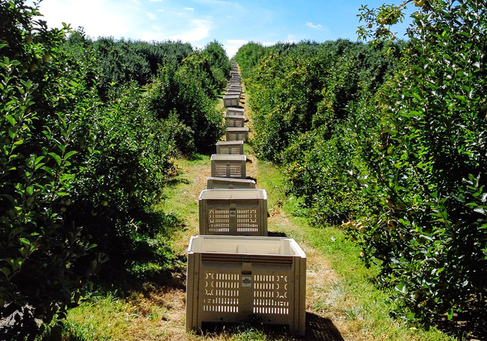 bear mountain orchards apple picking