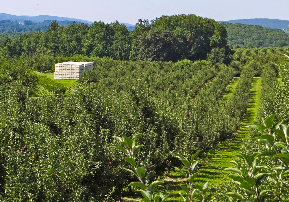 bear mountain orchards packing and orchard