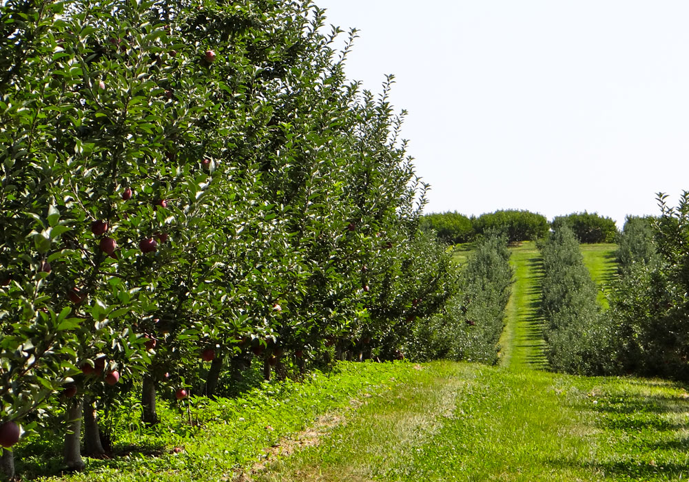bear mountain orchards fruit trees