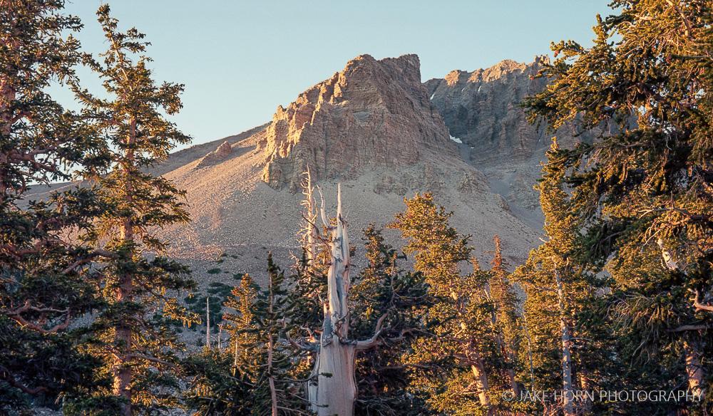 Great Basin NP | Leica M-A | f/8 |  Kodak Ektar