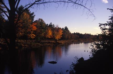 fall-colours-upriver-salm-h.jpg