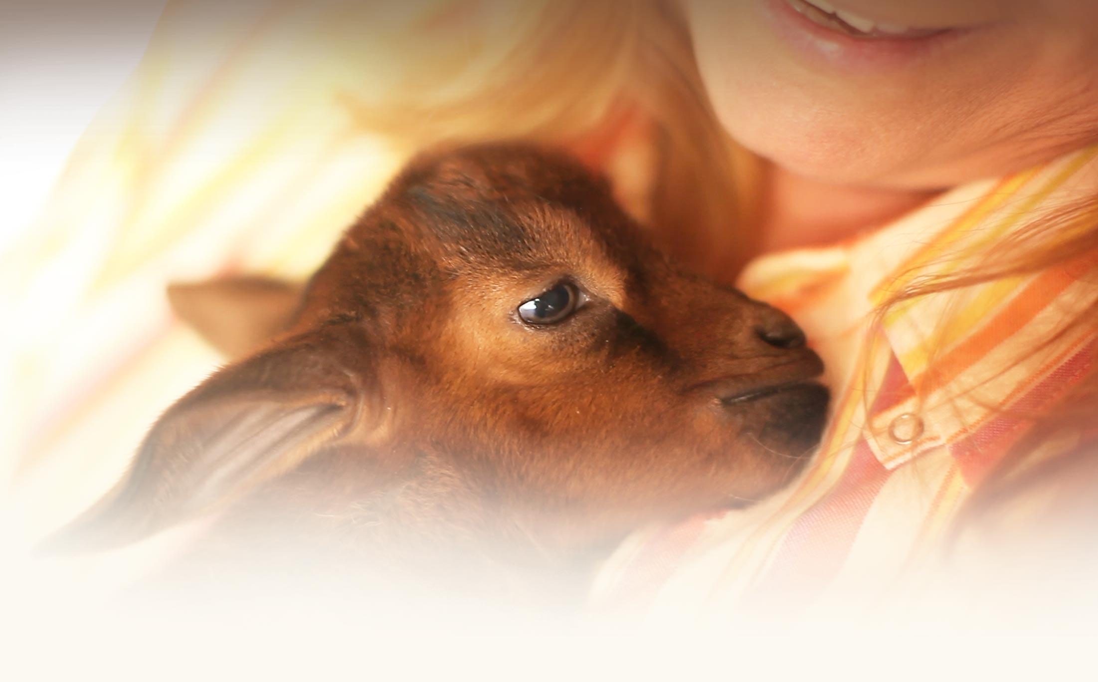 _delilah_baby-lamb.jpg
