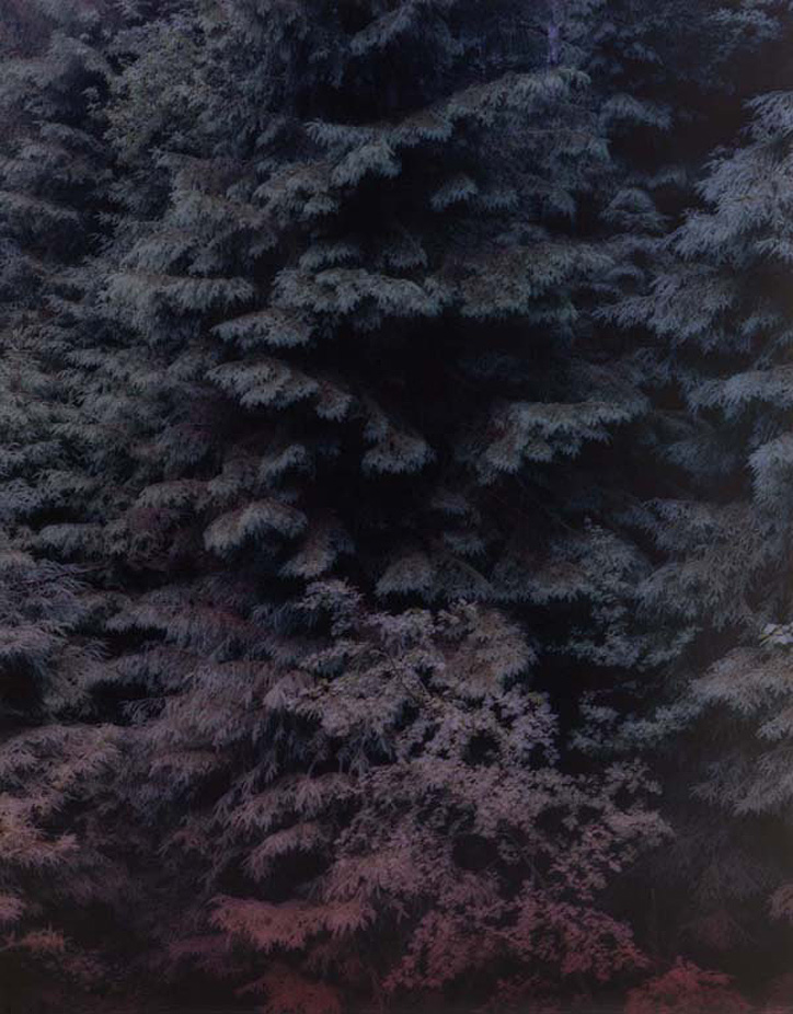 "This is Amira Fritz's favourite unique photograph from her ""Wild Nothing"" series which she handprinted. It took a week in and out of the dark room to complete and measures an impressive 1,30x1,60m"
